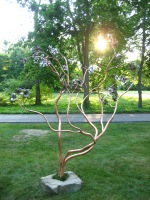 Magnolia Tree by Matthew Allen Albright